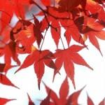 日光で紅葉を撮影するスポットやポイントは?おすすめグルメは?