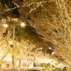 表参道イルミネーション2016 ヒルズのクリスマスツリー夜カフェ
