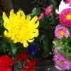 お彼岸の日程は?ぼたもちとおはぎどちら?お供えする花は?