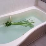 こどもの日は菖蒲湯に入ろう やり方や効能、由来について