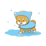 雨の日の犬の散歩 レインコートを嫌がる?着せやすいのは?