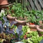 プランター家庭菜園で初心者が育てやすい野菜や虫つきにくいのは
